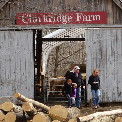 Perfect day for maple sugaring open house/barn
