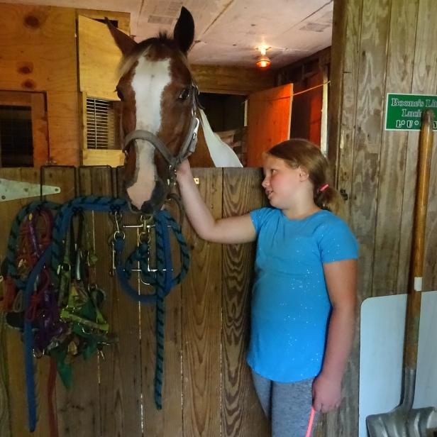 Beginning to love horses...